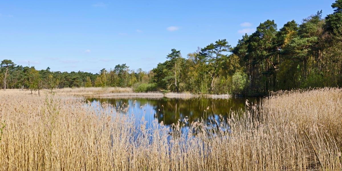 Umweltschonend - Natur und Umwelt:-Renaturierte Tongrube