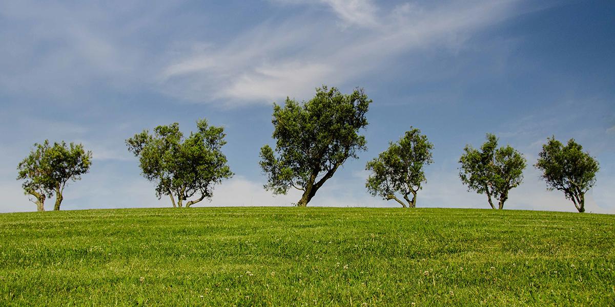 LAU Nachhaltigkeit Umweltpolitik